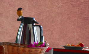 bird on coffeepot with red bg