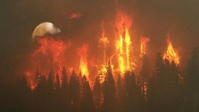 Full Moon Forest Fire