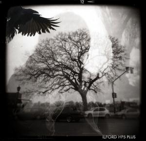 crow pastiche