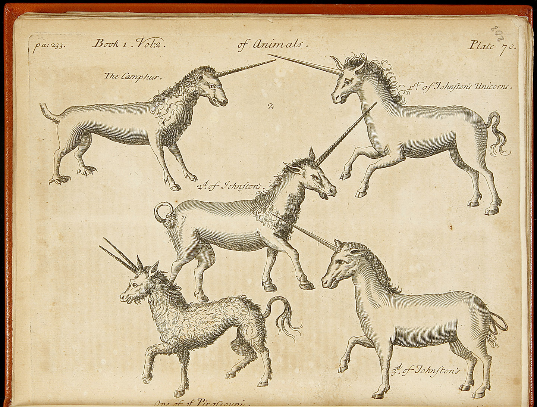 Unicorns all kinds.jpg