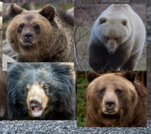 4-bears