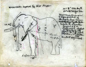 smithsonian-elephant-sketch-1955-sia2010-0605_tn