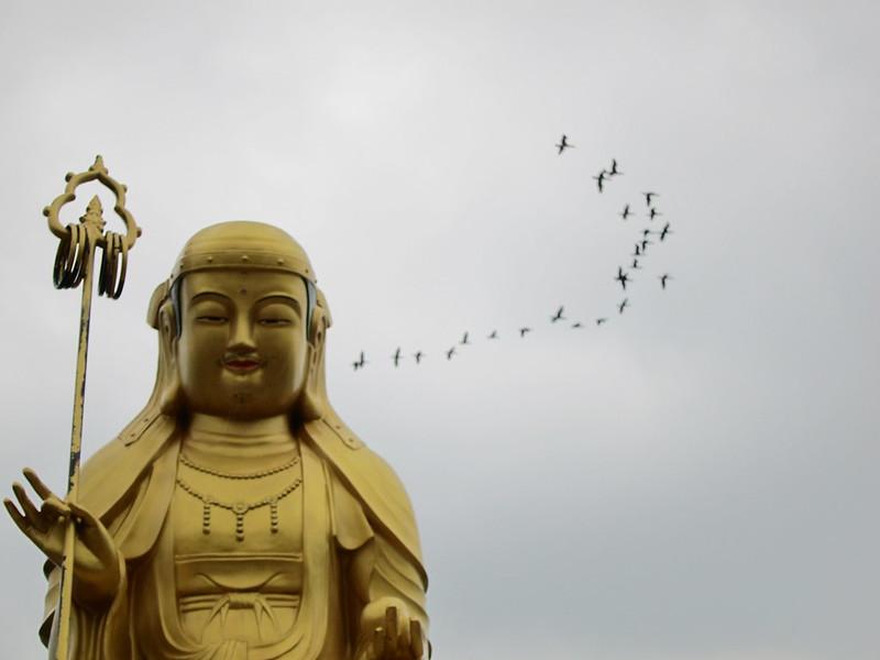 Buddha with birds_Ryan Bodenstein_Flickr_16717343026_58a673baba_c