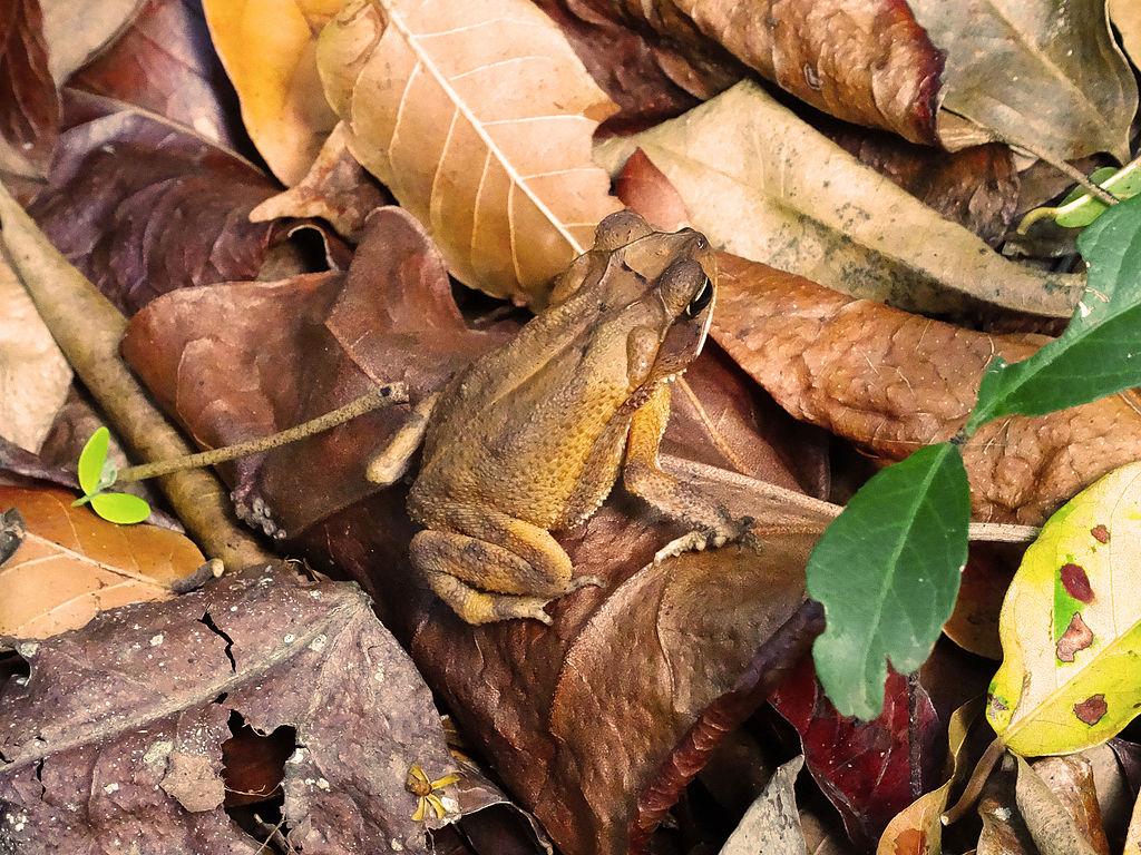 Hidden_frog